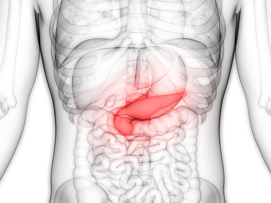 What does the pancreas do