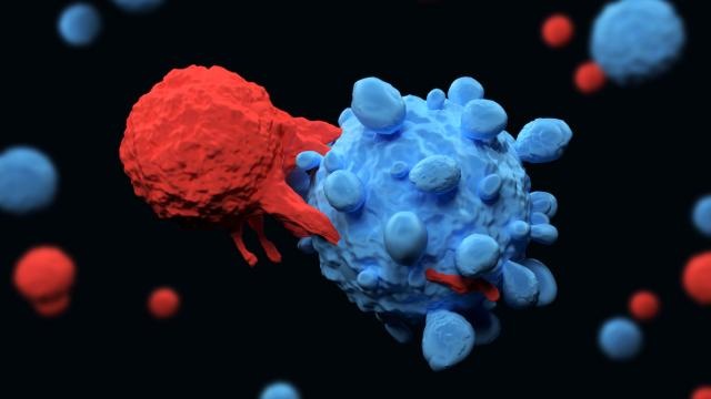 T-cell attacks cancer cell